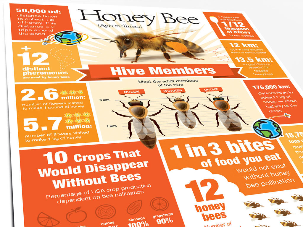 infographic about honey bees